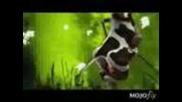 лудата крава 2