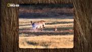 В обектива: Необичайното поведение на животните - 13 - Когато жертвата дава отпор