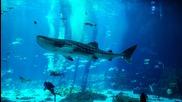 Atlanta (city/town/village), Aquarium (project Focus), Georgia Aquarium (zoo), Ultra High Definition