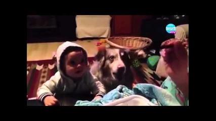 Куче което казва мама