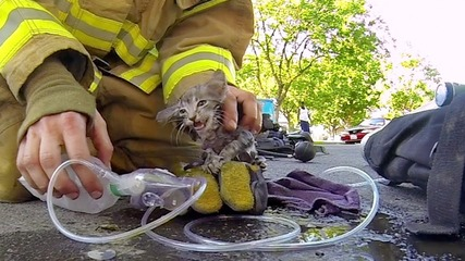 Gopro: Пожарникар спасява коте