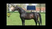 Продавам светещ кон!
