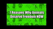 7 Reasons Animals Deserve Freedom Now