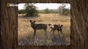 В обектива: Необичайното поведение на животните - 18 - Живот и смърт