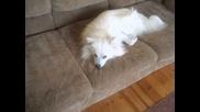 Моето кученце Бени