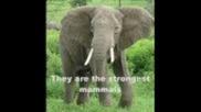 Top 10 - Най силни животни в света!!!