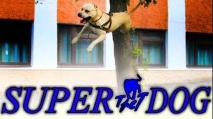 Кучето-паркурист(hd-високо Качество)