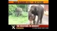 Слон побесня и оби човек