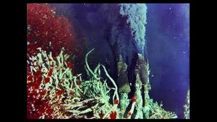 """"""" Удивительные существа океанских глубин"""" / Amazing Creatures of the Deep Ocean."""