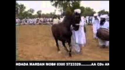 ku4ek konq кючек коня