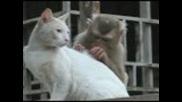 Маймунка и коте...
