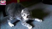 Котки се провалят в скачането! Смях на 100%! Част 2