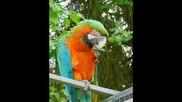 Lefteris Pantazis - O Papagalos