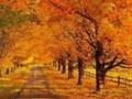 П И Чайковский Осень