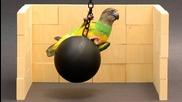 Kili Cyrus Wrecking Ball Parroty (папагалчето Кили)
