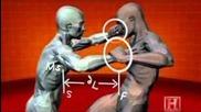 Human Weapon : judo, pancra