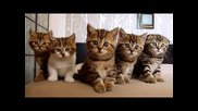 Funny Cats. The Best Compilation. Happy Birthday R5 !!!