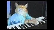 Котка свири на пиано (голям талант)
