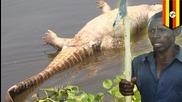Мъж отмъстил на крокодил за изядената си жена