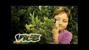 Stoned Kids / Надрусани деца 2013
