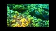 В Дълбините На Океана - Коралов Риф И Риби В Океана