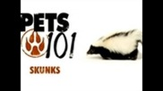 Pets 101 - Pet Skunks
