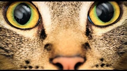 как животните виждат света