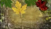 Elly Dorka - Scrisoare De Amor - Autumn Love Letter
