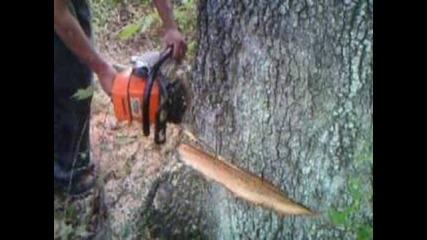 Logging in Saltville,va