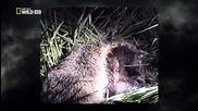 В обектива: Необичайното поведение на животните - 17 - Кръвни вражди