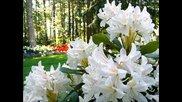 Ричард Клайдерман - Цветя и класическа музика