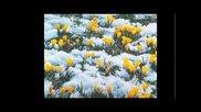 Шопен - Пролетен валс. Ричард Клайдерман.
