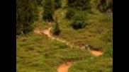 freeride downhill (hd)