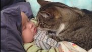 Котките обичат бебета - забавна компилация