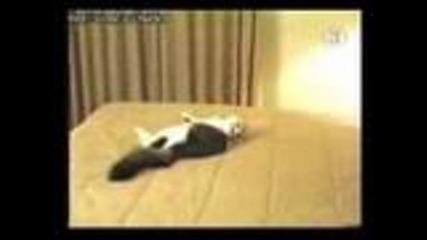 Кучето се Напуши :д:д:д