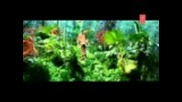 Nachle [full Song] Lakeer
