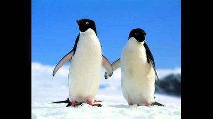 Avicii - Penguin (original mix)