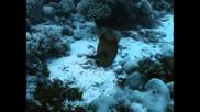 Одисеята на Жак Кусто - Коралови джунгли