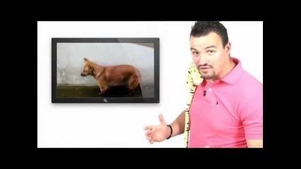 е:pizo:d 13 на Най-гледаните клипове в Youtube