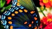 Borboletas uma dadiva dos deuses пеперуди