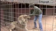 Дори и на игра Лъва си е Лъв!!!