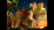 Flowers after summer rain. Zene: Hayley Westenra: Summmer