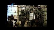 Български Филми - Сватбите на Йоан Асен ( част 4 )