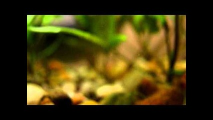 Aquarium Fish Hd