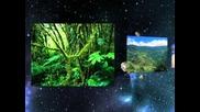 Djamaikata i Ork.univers 2012