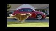Куче тренира и успява да надбяга Vw
