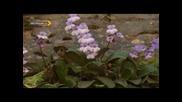 Безсмъртното Цвете - документален филм за Haberlea Rhodopensis, родопския силивряк