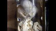 Вальденбургский монстр.генетические эксперименты пришельцев.живая тема
