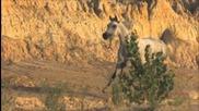 kuhaylan - благодатта на пустинята