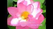 My Rose-road, My Lotus-home (by Sri Chinmoy)